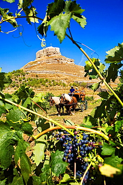 Driving calash in Comenge winery vineyards in the Ribera del Duero wine region, castle in background, Curiel de Duero, Valladolid province, Castilla-Leon, Spain