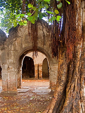 Ruins of an old caravanserai taken over by the jungle, Peshawar, Pakistan