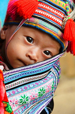young Hmong baby being carried on his mothers back near Sapa Vietnam