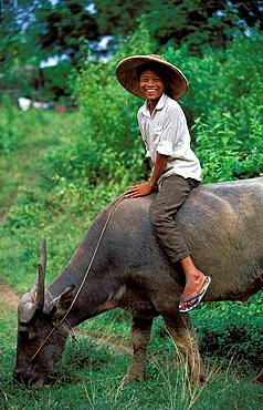 Shepherd and buffalo, hsipaw, shan state, Myanmar