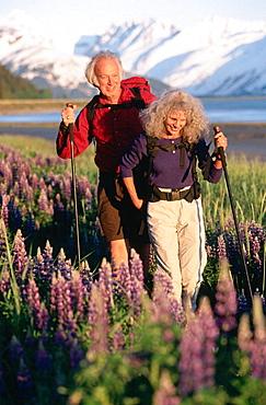 Senior couple in lupine field, Chugach National Forest, Alaska, USA