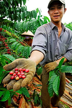 Farm worker in Dalat, Vietnam