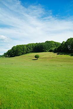 An ash-tree in the meadow Aldatz, Navarra, Spain