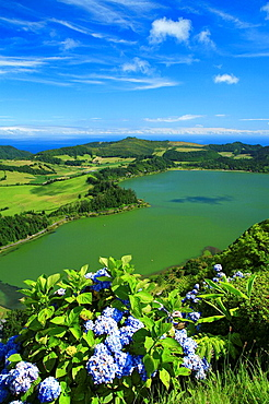 Furnas Lake, with hydrangeas on the foreground  Sao Miguel island, Azores islands, Portugal