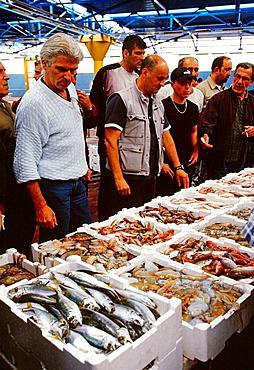 Mercato Ittico (Fish Market), Fish auction, Viareggio, Lucca province, Tuscany, Italy