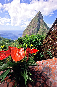 red tropical Anthurium (Anthurium andreaenum) flower at Ladera Resort overlooking one of the twin volcanic peaks of Petit Piton and Gros Piton, St, Lucia, West Indies.