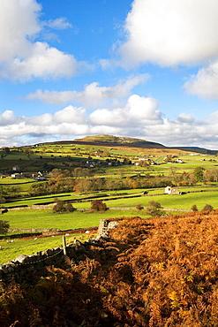 Calver Hill near Reeth Swaledale North Yorkshire England