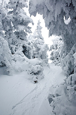 Kinsman Ridge Trail on Cannon Mountain during the winter months in the White Mountains, New Hampshire USA
