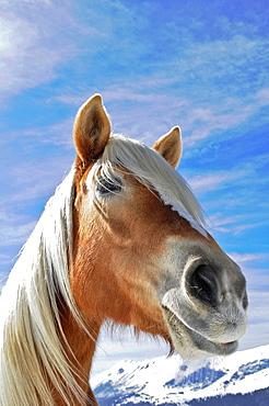 horse portarit close up