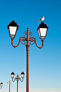 Seagull standing on lamppost, Saintes-Maries-de-la-Mer, Southern France