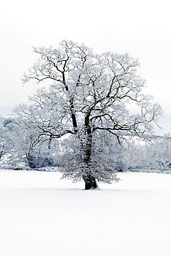 Winter scene, Herefordshire, England UK.