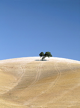 agriculture, driving tracks, Field, grain field, hill, scenery, landscape, Spain, Europe, tree, . agriculture, driving tracks, Field, grain field, hill, scenery, landscape, Spain, Europe, tree,