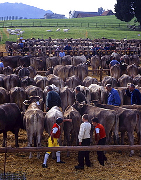 Livestock show, cows, cattle, farmers, peasants, herdsmen, dairymen, animals, livestock, agriculture, Hundwil, Appenze. Livestock show, cows, cattle, farmers, peasants, herdsmen, dairymen, animals, livestock, agriculture, Hundwil, Appenze