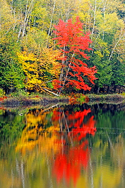 Autumn reflections in Ril Lake, Lake of Bays, Ontario