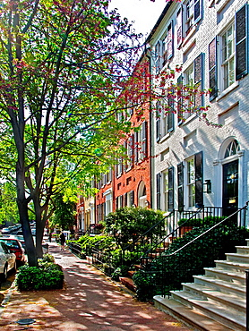 Sunlight shines on springtime flowering trees on historic N Street in Georgetown, Washington, D C Georgetown is a neighborhood located in the Northwest quadrant of the city along the Potomac River waterfront