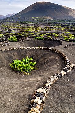 La Geria, winegrowing area Lanzarote Canary Islands, Spain