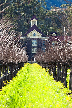 USA, California, Northern California, Napa Valley Wine Country, Rutherford, Rubicon Estate Vineyard, owned by film dirctor Francis Ford Coppola, vineyard in winter
