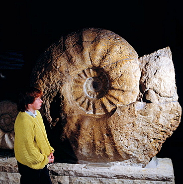 Germany, Munster, Munsterland, North Rhine-Westphalia, natural history museum, largest ammonite in the world found in Luedinghausen-Seppenrade