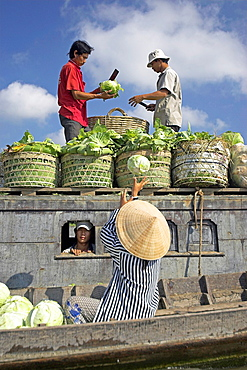 Woman in conical hat loads trimmed cabbages on small river boat Cai Ran floating market near Can Tho Vietnam