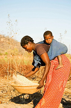 Zambia, Tonga woman with child on her back pounding grain near the shore of Lake Kariba, a man-made dam between Zambia and Zimbabwe which is 220 km long and up to 40 km wide and which was built in the late 1950s, Lake Kariba, Zambia.