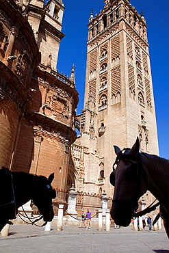 Cathedral, Giralda tower from Plaza Virgen de los Reyes, Sevilla, Andalucia, Spain