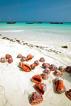 Nungwi Beach, Zanzibar Island, Tanzania