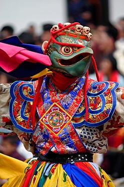 Dancer at the Tsechu festival, Thimphu, Bhutan - 817-369348