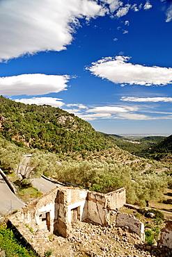 Olive Mountain, Bunyola, Sierra de Tramuntana, Majorca, Balearic Islands Spain