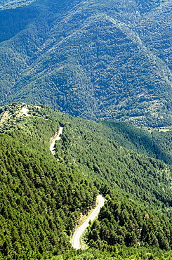 Gravel road across the forest in Escuain Valley, Pyrenees of Huesca, Aragon, Spain
