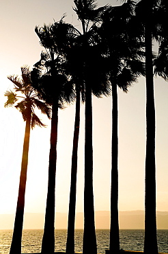 Palm trees, Kempinski Hotel, Dead Sea, Jordan, Middle East.