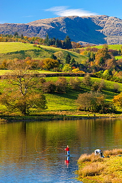 Woman fly fishes in Esthwaite Water in the Lake District National Park, Cumbria, England, UK, Europe
