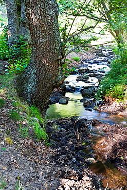 The Yedra stream in the Sierra de Gredos avila Castilla Leon Spain
