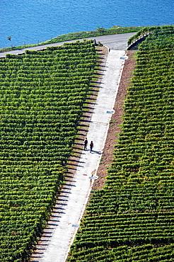 Couple Walking Across Vineyards, Lavaux Vineyards, Unesco Heritage, Swiss Riviera, Canton Vaud, Switzerland, Lake Geneva Shore