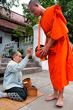 Barefoot monks collecting food and drink alms early morning Luang Prabang Laos
