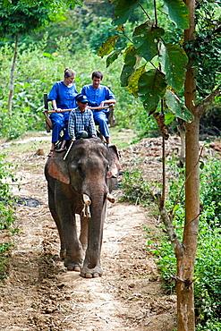 Elephant trek near Luang Prabang Laos PDR