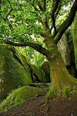 chaos of the mill, town of huelgoat, Finistere, Brittany, France