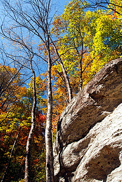 Trail to Moore Cove Falls, Pisgah National Forest, near Brevard, North Carolina, USA