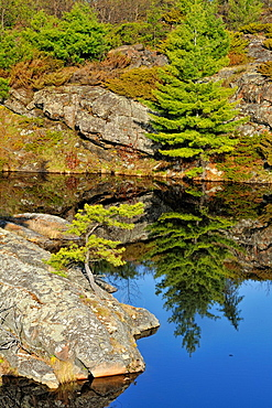 Granite outcrops and pines reflected in a small pond, near Whiefish Falls, Ontario, Canada