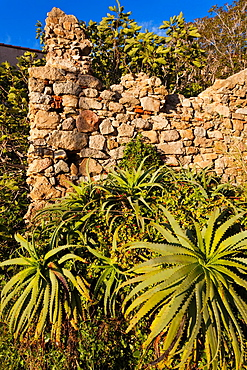 France, Corsica, Haute-Corse Department, La Balagne Region, Calvi, Citadel, ruins of the house-birthplace of Christopher Columbus, late afternoon