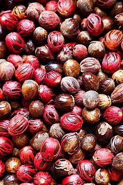 St Vincent and the Grenadines, Bequia, Port Elizabeth, nutmeg