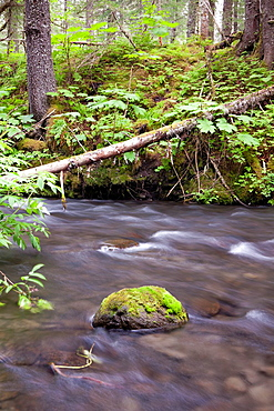 River near Seward, Kenai Peninsula, Alaska, USA