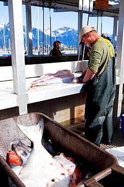 Fishing activities in the harbour of Seward, Kenai Peninsula, Alaska, USA
