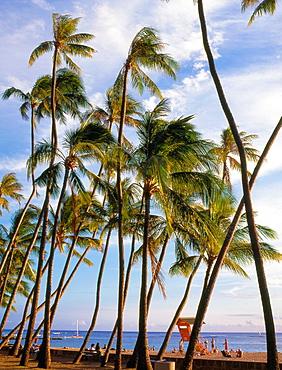 USA, Hawaii, Oahu, Waikiki, Sans Souci Beach
