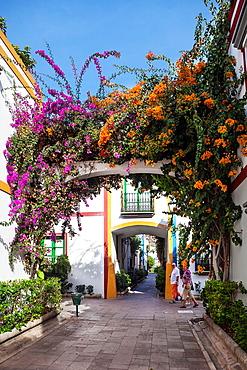 Spain , Canary Islands , Gran Canaria Island, Puerto de Mogan City, Bougainvillea flowers