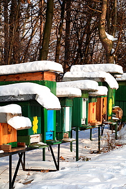Apiary with wooden beehives on a sunny winter day, Male Karpaty, Slovakia