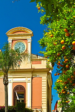 An orange tree in downtown Sorrento, Campania, Italy