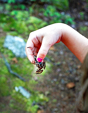 A young girl's hand holding a spotted frog