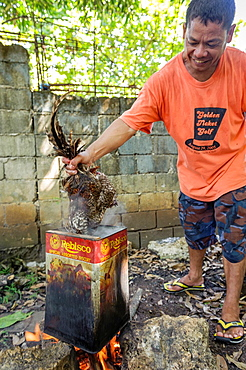 Man scalding a dead rooster that lost a fight, Puerto Princesa, Palawan, Philippines
