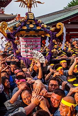 Sanja Matsuri Festival, Sensoji Temple, Asakusa Jinja, Asakusa, Tokyo, Japan, Asia