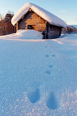Old barn in sunny winter landscape in swedish lapland
